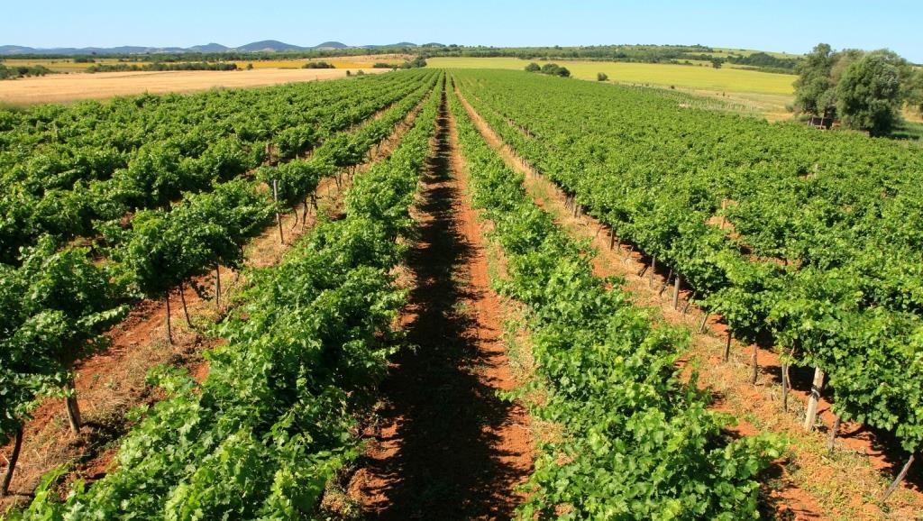 Lovico Vineyards