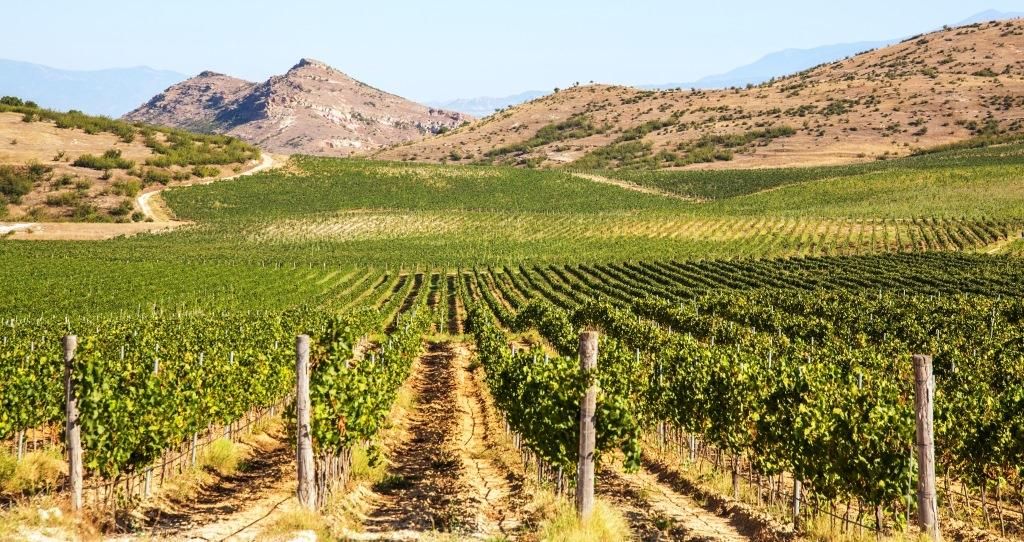 Logodaj Vineyards