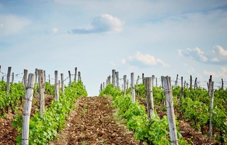 Terra Tangra Vineyards